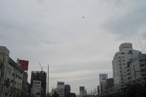 20060318_2.jpg