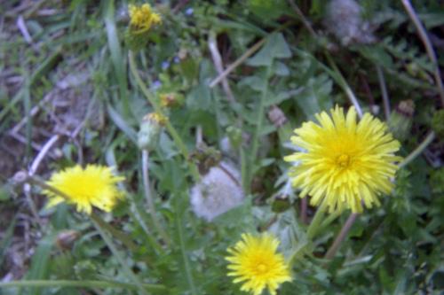 20070606_04.jpg