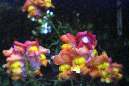 20070606_08.jpg