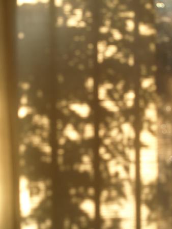 光/木の葉の影