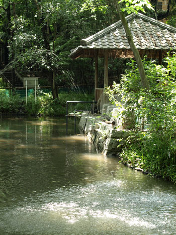 公園内にある池