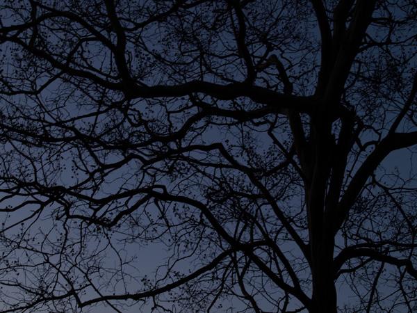 夕闇の百日紅