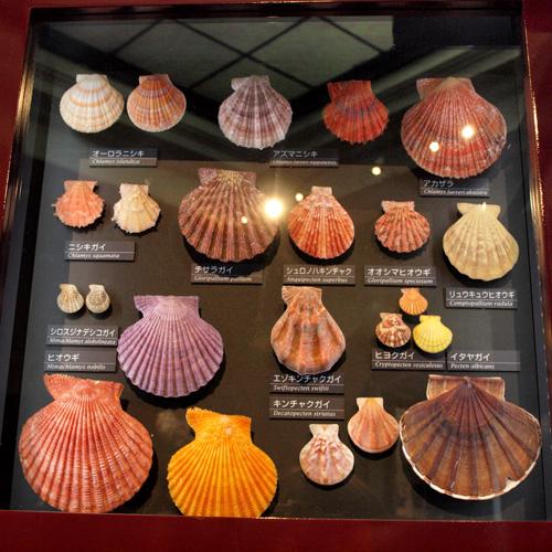 きれいな貝殻