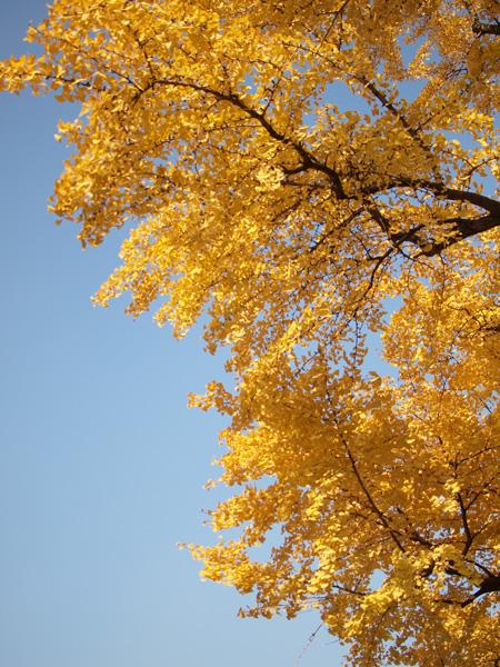 すっきりと晴れた秋晴れ