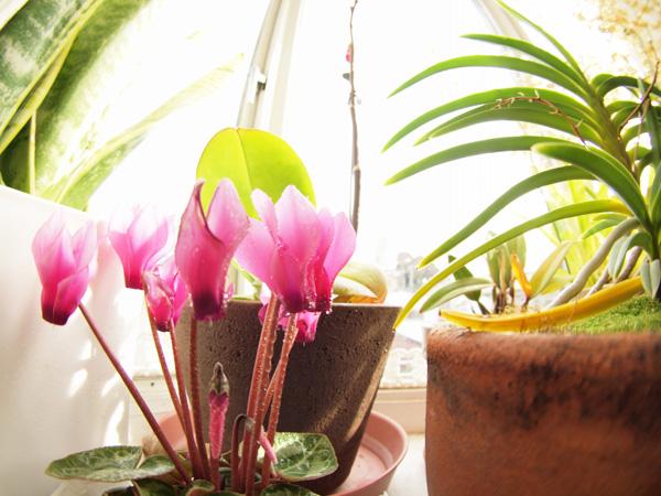 植物を育てている出窓