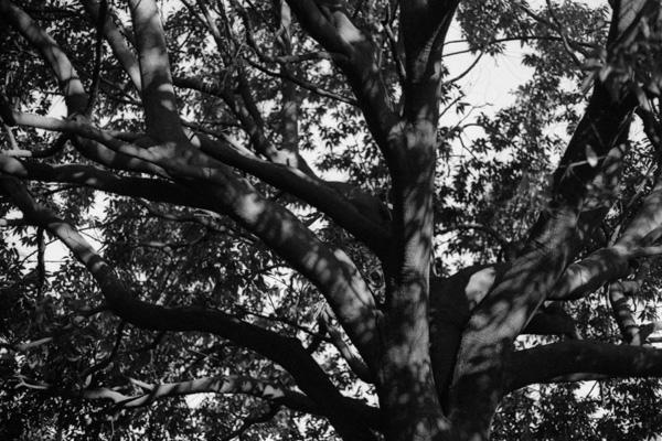 冬の木洩れ陽