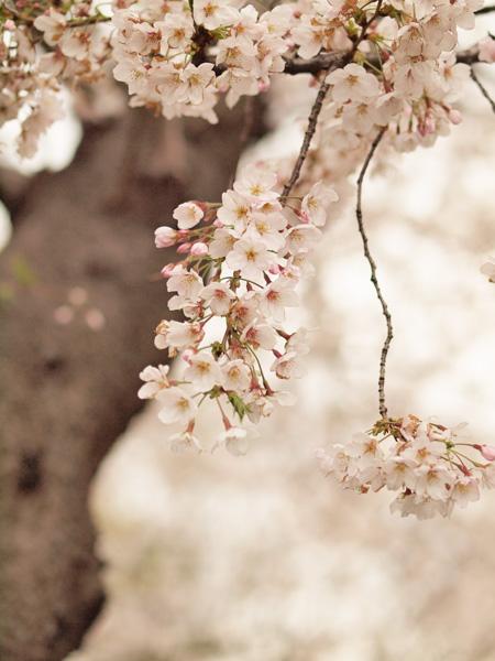 花の数も多くよく咲いてました