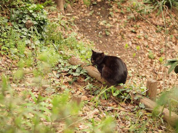 元町公園の猫
