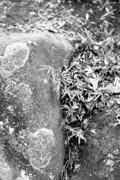 地面と苔生した岩