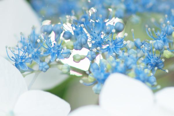 花の部分をよく見ると