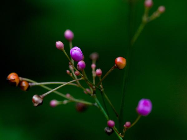花と実の色が混在して楽しい