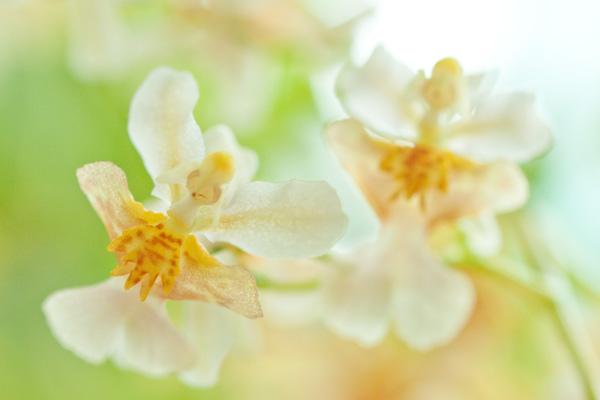 蘭は花期が長い