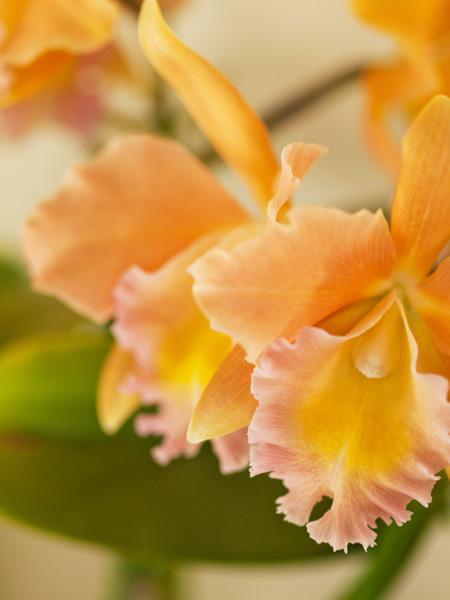 淡いオレンジ・ピンクの優しい色合い