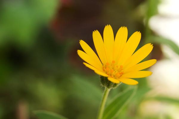 冬知らずには花びらに切り込みがある