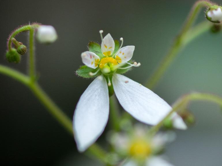 雪の下の花をクローズアップ
