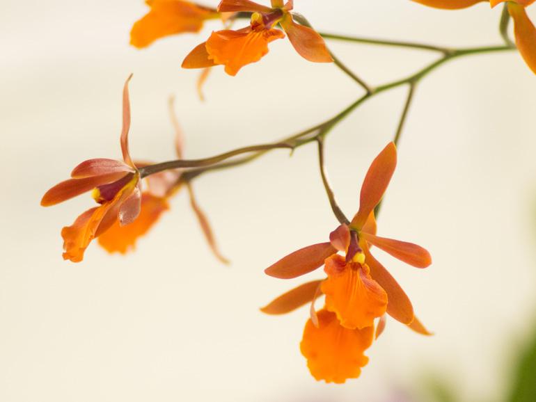 ツートーンのオレンジが綺麗