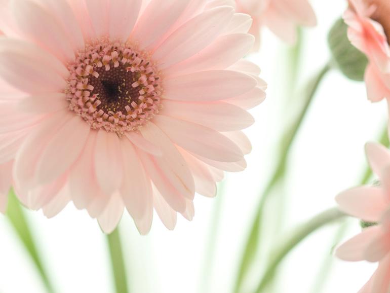 みな元気な花